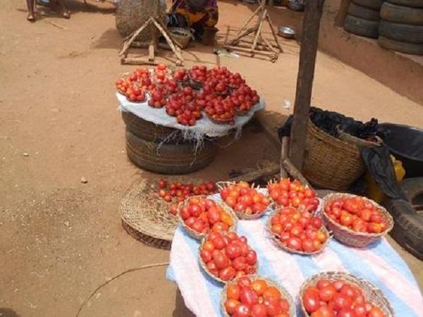 vente de tomate fraîche au marché d'abomey