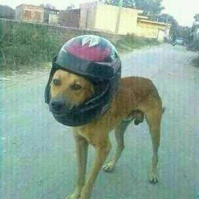 chien et port du casque au bénin
